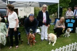 Dog-show-at-Shannon-Court-a.jpg